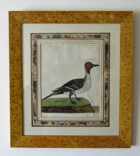Elazer Albin Sea Pheasant & Black Game Hen